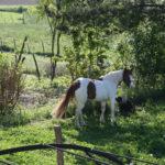 Les chevaux à leur arrivée