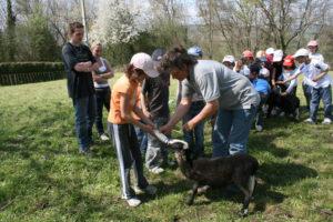 Comment nourrir les agneaux