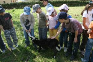 Découverte des agneaux
