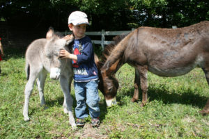 A la découverte des ânes
