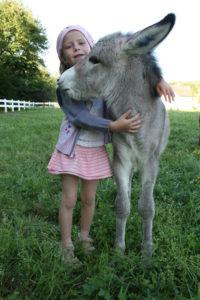 Rencontre avec les ânes