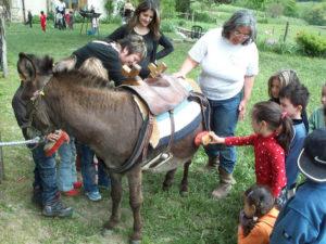Zazou et les ânes